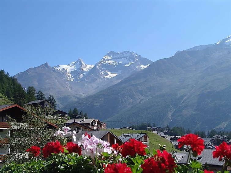 Photo of Alpenfirn